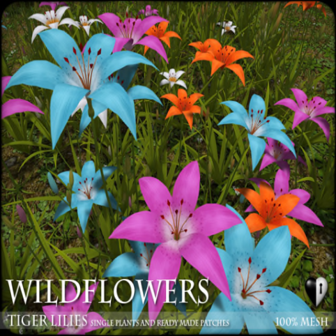Heart - WILDFLOWERS- Tiger Lilies -A1