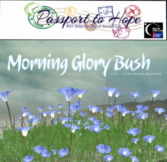 boudoir morning glory bush