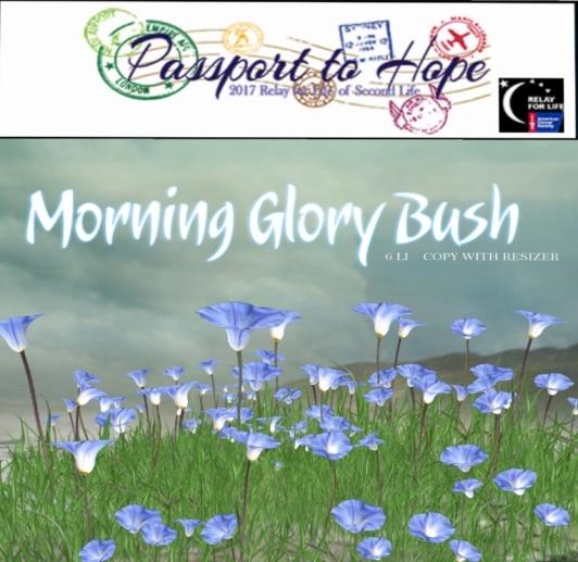 boudoir morning glory bush